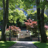 Japanese maples adorn steps to Old Main